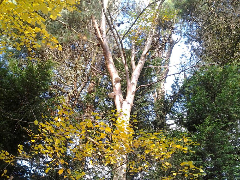 W drodze do przedszkola. Co widzicie na drzewie?