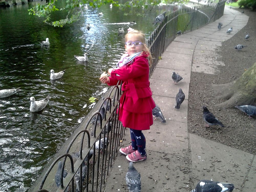 Karmimy ptaki w Saint Stephen's Green