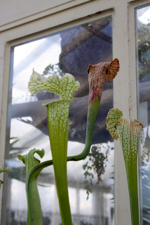 Żarłoczne rośliny!