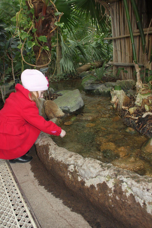Zwiedzanie Botanic Garden