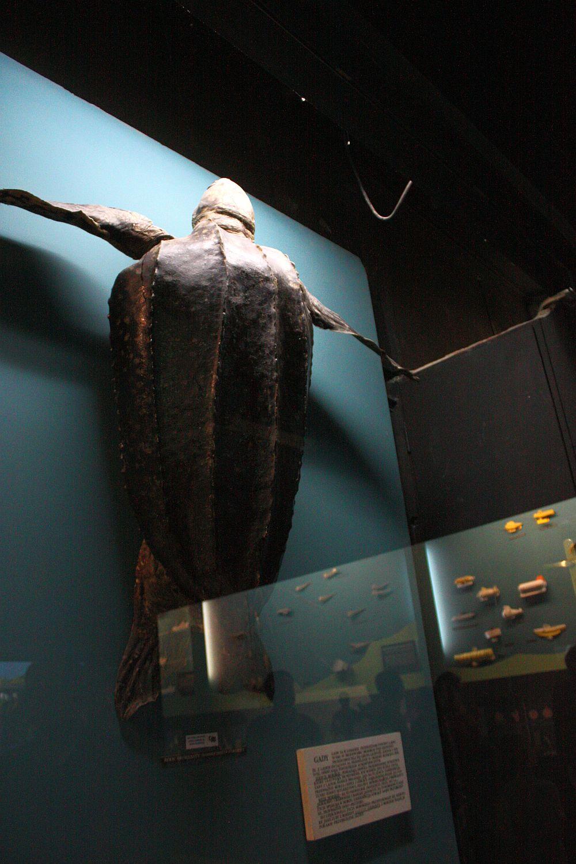Akwarium morskie w Gdyni