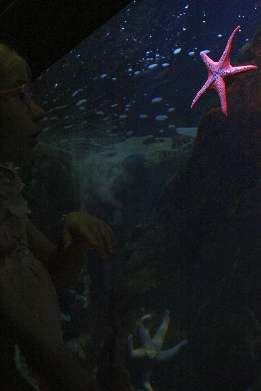 Zwiedzam Akwarium morskie w Gdyn