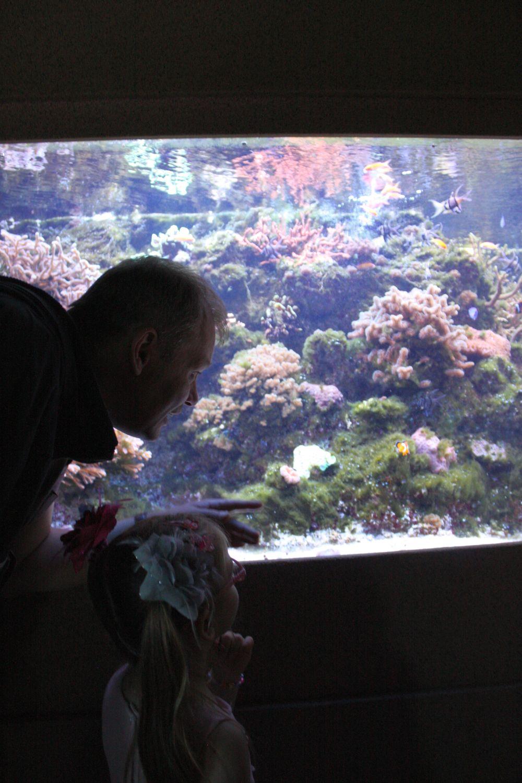 Rodzinne zwiedzanie Akwarium