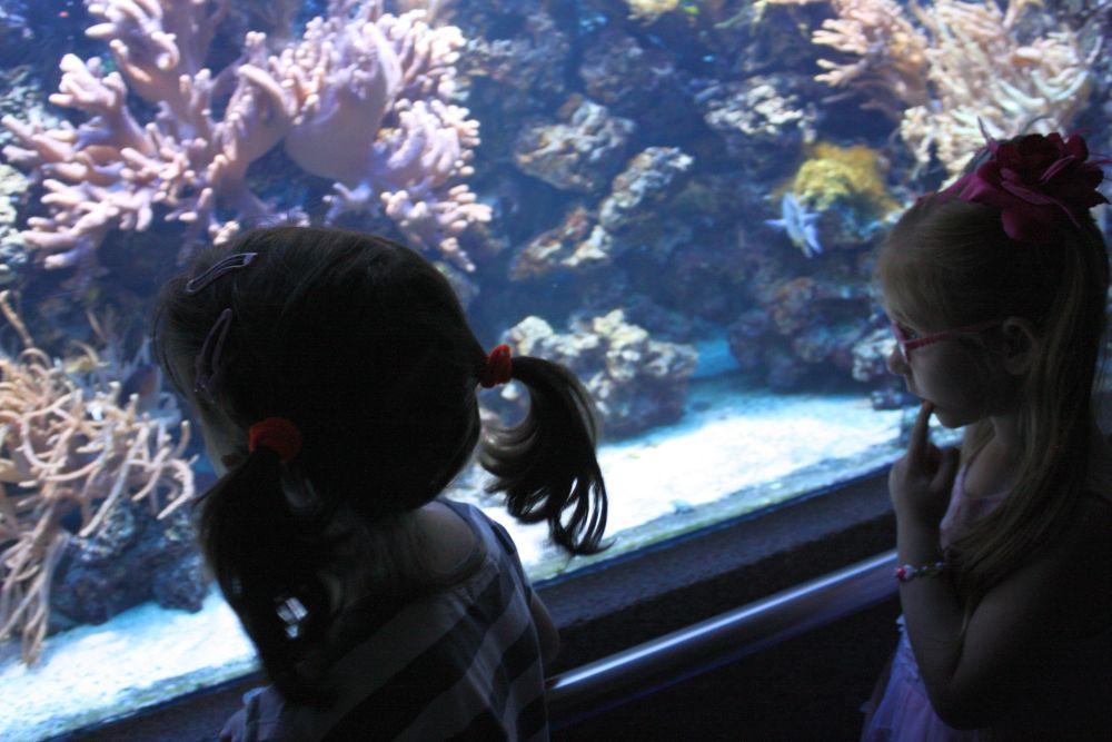 Zwiedzamy Akwarium morskie w Gdyni