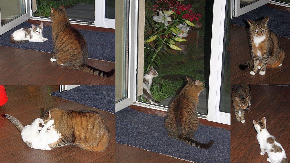 Moje koty: Luise i Limonka