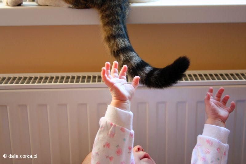 Dotrzymałam słowa - złapałam kotka