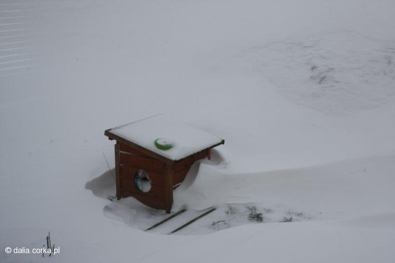 Zima 10 stycznia 2010_nasza budka dla bezdomych kotków